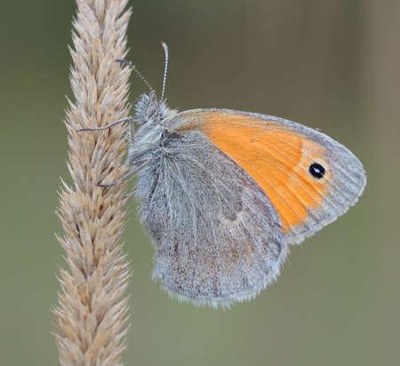 butterfly orange photo