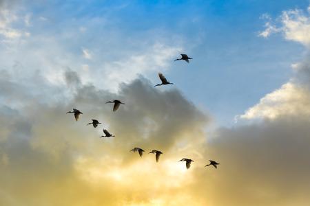 fling: Birds fling have tailing on blue and orange sky