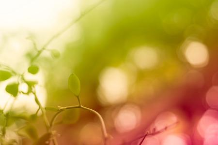 foliage tree: colourful background with foliage tree