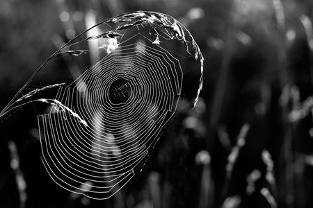 Morning web hanging between two blades photo