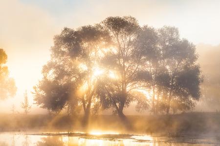 fog: A Misty Solar Dawn near the river Seversky Donets Stock Photo