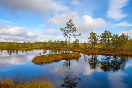 bogs: Island with pine tree. Viru bogs at Lahemaa national park