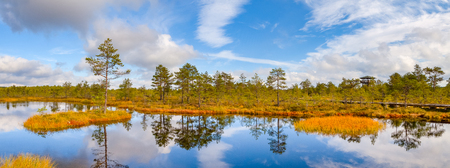 Panoramic view of swamp pond and island with pine tree. Viru bogs at Lahemaa national park