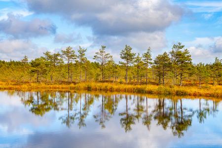 bogs: Beautiful reflection of pine trees in swamp lake, autumn season. Viru bogs at Lahemaa national park