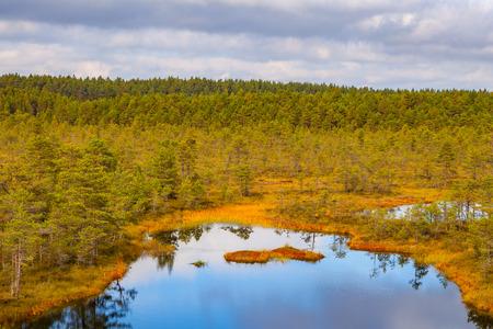 turba: Beautiful lake in swamp land. Viru bogs at Lahemaa national park