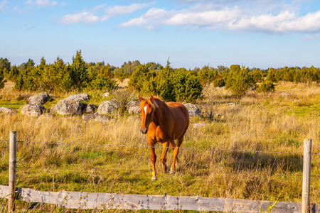 Beautiful brown horse in field near a fence Stock Photo