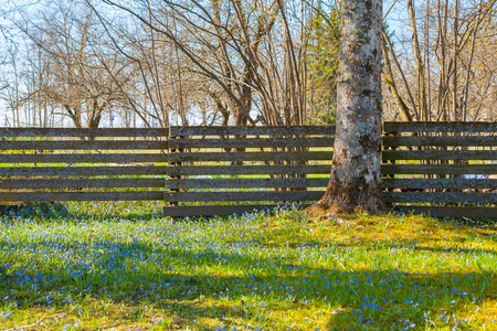Blooming spring meadow with small blue wildflowers and trees Stock Photo