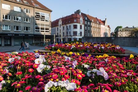 Bright colorful flowers blooming on the street of old town of Tallinn
