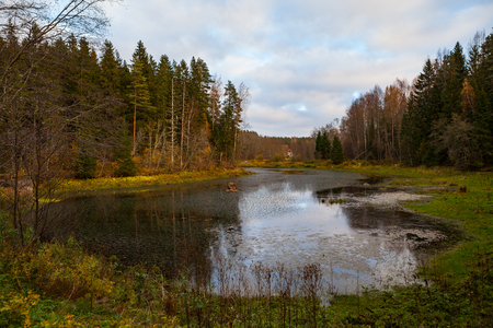 Autumn landscape with pine forest and a pond.