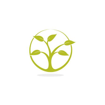 deciduous tree: Deciduous tree vector illustration. Illustration