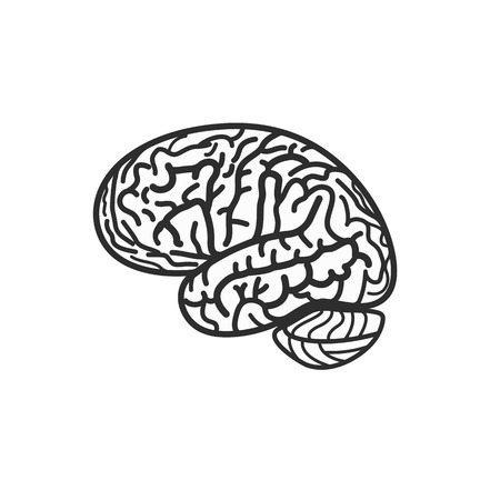 Isolated black and white brain contour vector logo. Gyrus silhouette logotype. Human intelligence illustration Illustration
