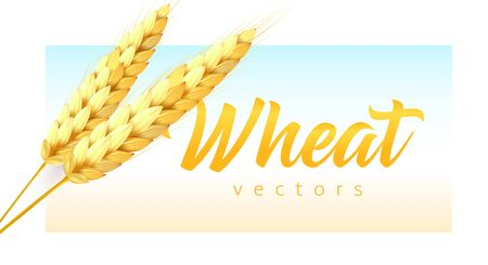 Two realistic wheat spikelets with wheat lettering on sky and field color background. Modern emblem template, vector illustration. Çizim
