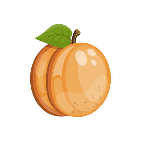 Cartoon ripe apricot fruit, vector illustration