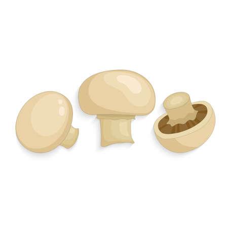 Champignon mushrooms. Fresh organic realistic mushrooms, vector illustration