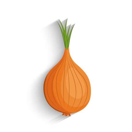 Onion, vector illustration. fresh white onion.