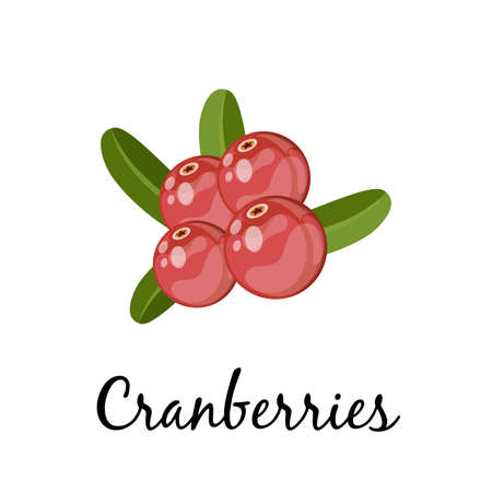 Cranberries with green leaves on white background. cartoon vector illustration