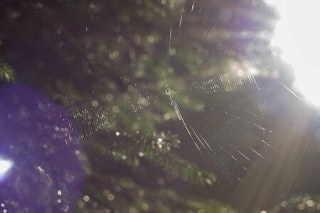Beautiful cobweb between trees in clear weather, sunlight glare