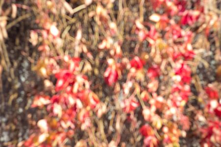 Blurred texture of lush variegated foliage. Defocused nature autumn background in sunset. Multicolor bokeh Stok Fotoğraf