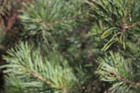 Blurred fir-tree spruce with sparkles background wallpaper. Christmas new year year background template. Vintage effect Copy space.