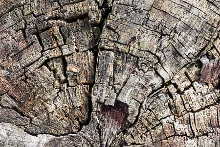 Shabby gray tree cracked old trunk, horisontal natural organic background texture close up detail Stok Fotoğraf