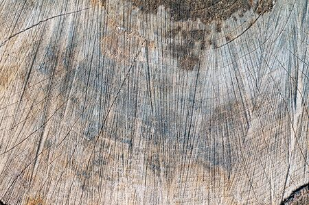 wood rings texture background. cracked wooden cut