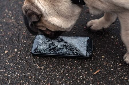 Broken and damaged smartphone with cracks on glass screen next to disobedient dog pug. Dog has ruin and bitten the cell phone. Concept of warranty and lost smartphone Imagens