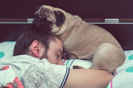 pug dog sleeping on pillow with owner man on his head. Pet sleep in bed and protects owner sleep