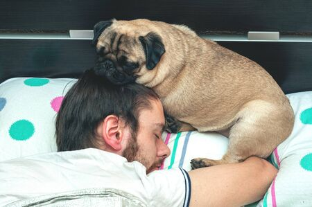 pug dog sleeping on pillow with owner man on his head. Pet sleep in bed and protects owner sleep Archivio Fotografico