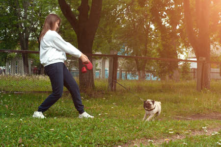 Dog lagging behind refuses to walk and drags leash in opposite way