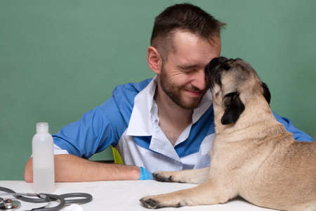 Smiling veterinarian with stethoscope loving pug dog in hospital after checkup. Cute puppy dog licks the vet in gratitude for the treatment. care and professional medical care of dogs.