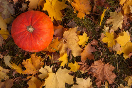 Pumpkin and autumn fall leaves. Halloween design background with copy space top view Foto de archivo