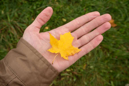 Hand holds maple yellow leaf on the background