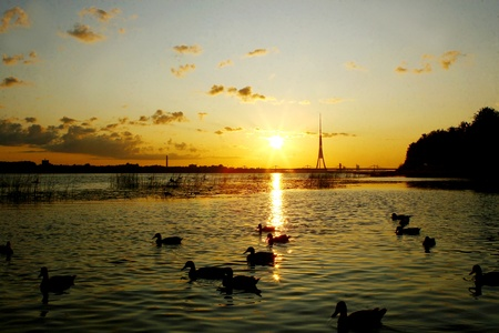 a beautiful landscape with birds silouette Stock Photo - 8320855