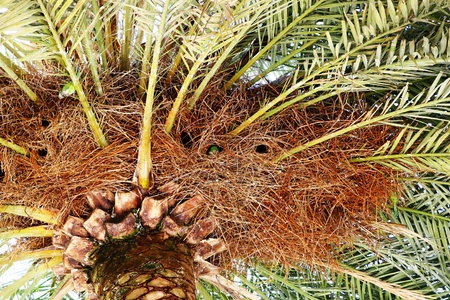 beautiful nature background of palm Stock Photo - 8321270
