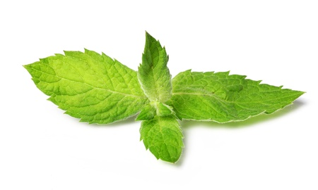 Close up of fresh mint leaves isolated over white background photo