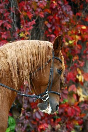 Beautiful brown horse at farm photo