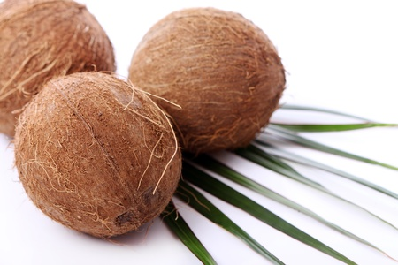 Close up of Fresh coconuts on white background photo