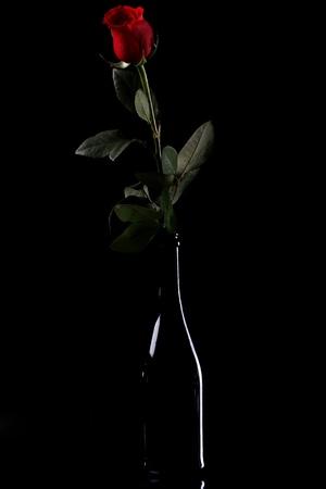 rosas negras: Hermosa rosa roja en la botella