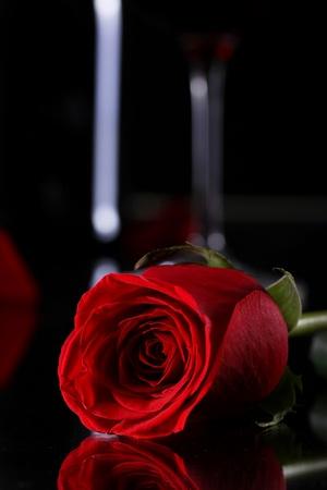 rosas negras: Cerca de la rosa roja en la oscuridad Foto de archivo