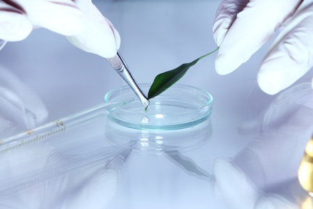 Science experiment with plant leaves in laboratory photo