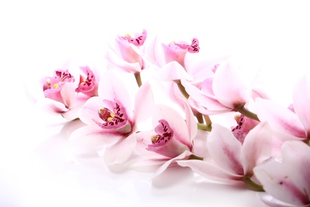 Beautiful orchid over white background Stock Photo