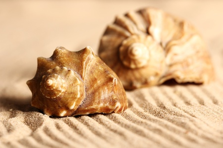 Close up of seashells on the sand photo