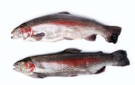 Fresh trout over white background photo