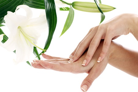 Woman hands and lilly flower over white background photo
