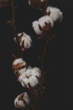 plant gossypium: