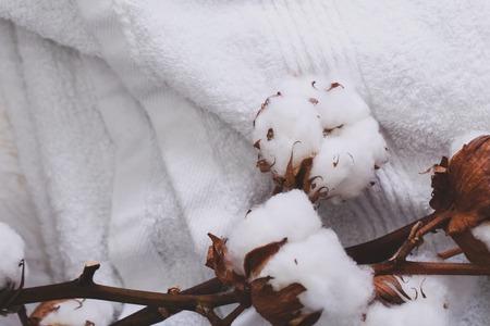 plant gossypium: Cotton flower on a white towel Stock Photo