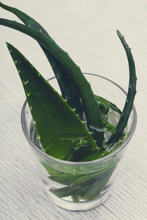 Medicine, spa. Aloe vera on the table photo