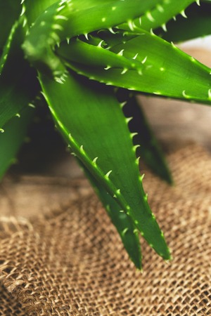 Medicine. Aloe vera on the table photo
