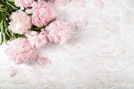 peony: Flowers. Beautiful peony on the table