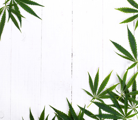 hoja marihuana: Cannabis sobre un fondo blanco